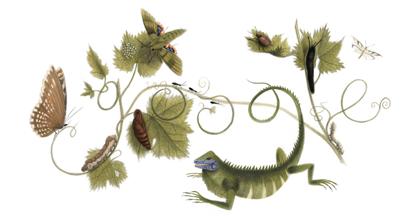 Maria Sibylla Merian – Google Doodle zum 366. Geburtstag!